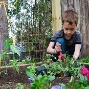 سرگرمی کودک با گیاهان