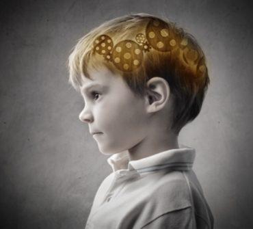 رشد مغز کودک، ۲۲ ماهگی تا ۲۴ ماهگی